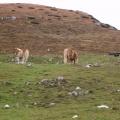 20061209Monte Stivo - 22 Ottobre 2006 - 04
